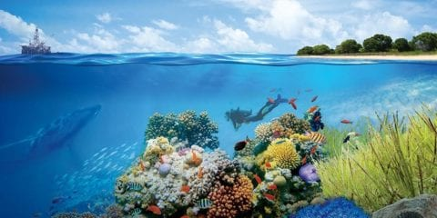 We're protecting coral ecosystems through advanced DNA analysis