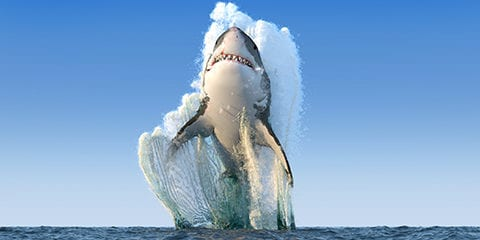 Shark jumping out of the water